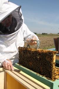 Jean-Claude récoltant le miel.